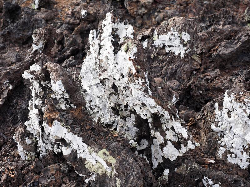 Stuffed lava on island Islote Tintoreras commemorates the moonland, Galapagos, Ecuador royalty free stock photo