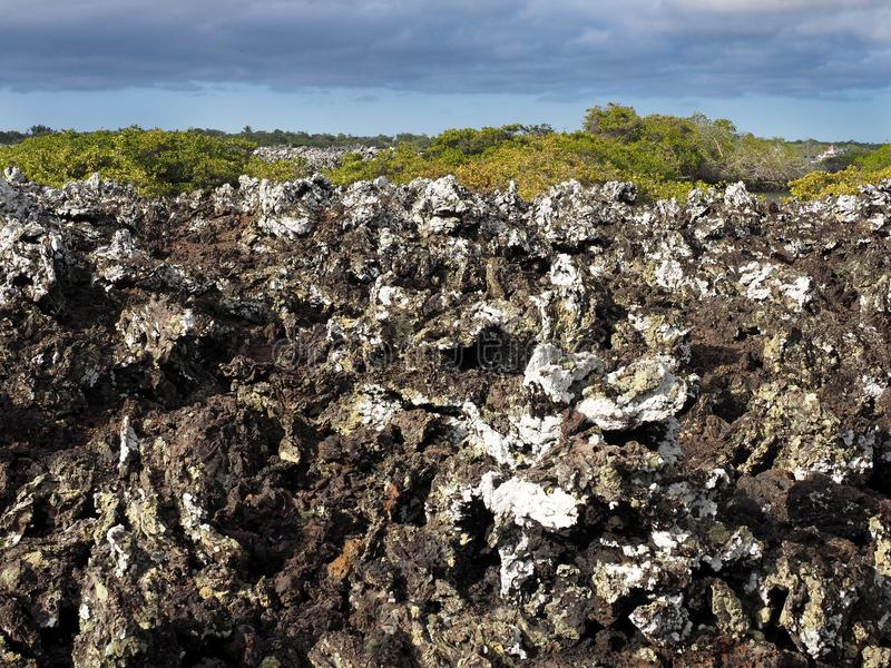 Stuffed lava on island Islote Tintoreras commemorates the moonland, Galapagos, Ecuador royalty free stock images