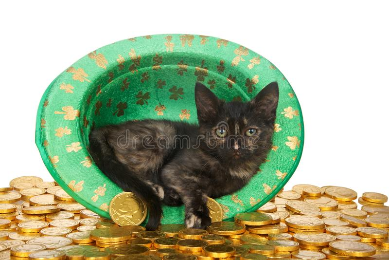 Tortie tabby cat in leprechaun hat on gold coins. One Tortie kitten in a Saint Patrick`s Day themed green top hat with four leaf clovers laying on a bed of gold stock image