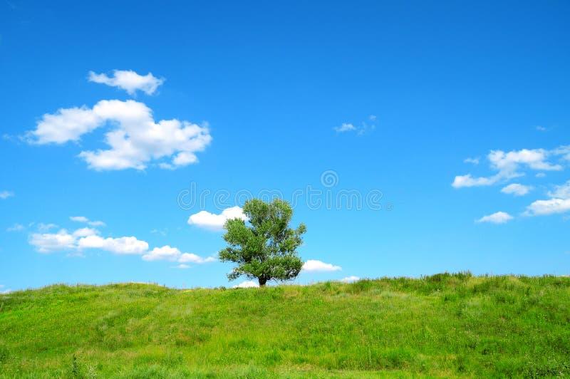 Download One tree stock image. Image of field, seasonal, meadow - 22551749