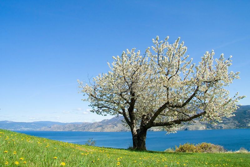 One tree stock images
