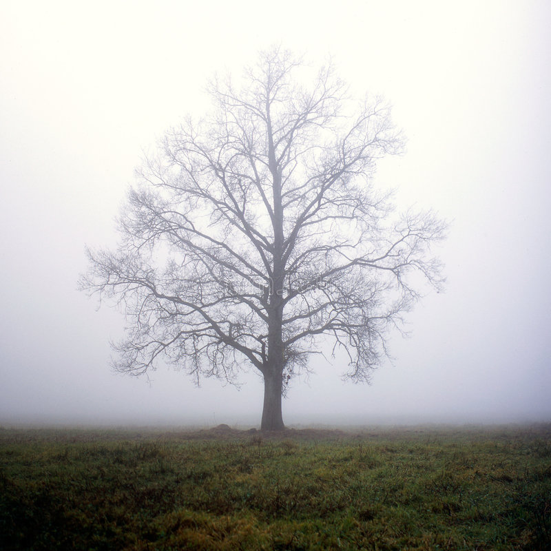 One tree in fog royalty free stock photos