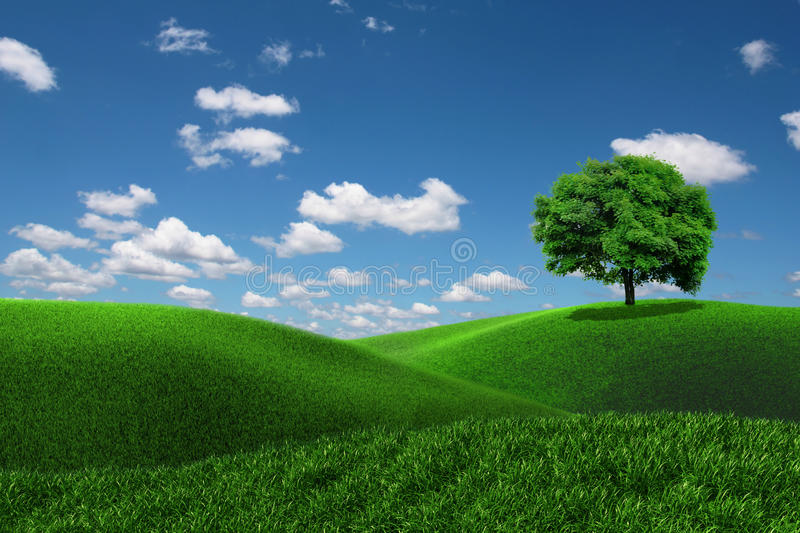 One tree on a grass field
