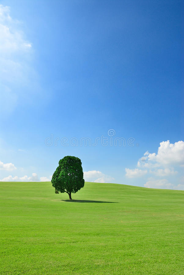 One tree in green field. Blue sky stock image