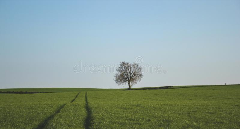 One Tree On A Green Grass Land Free Public Domain Cc0 Image