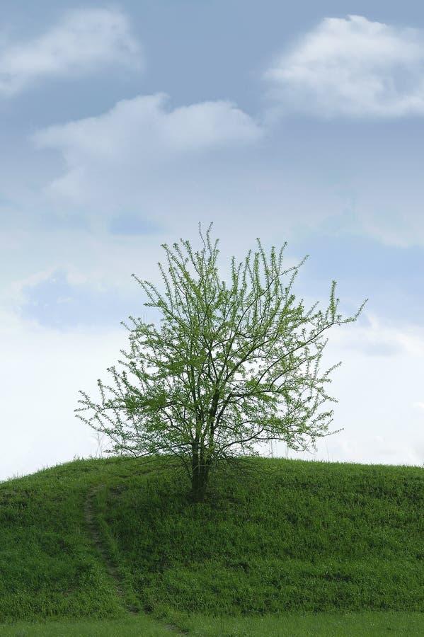 One tree hill stock photo