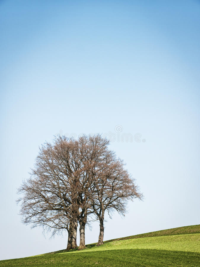 Download One tree stock photo. Image of landscape, image, urban - 34730646