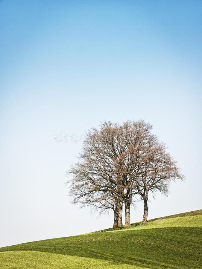 Download One tree stock photo. Image of leaf, nature, clear, blue - 34780624
