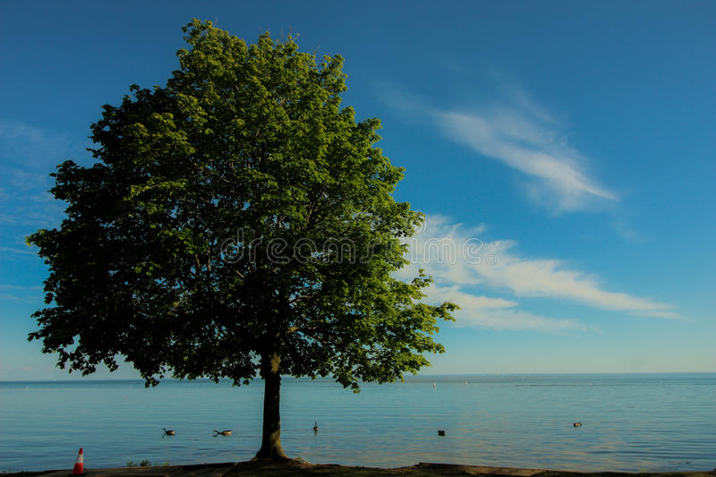 One tree point royalty free stock photography