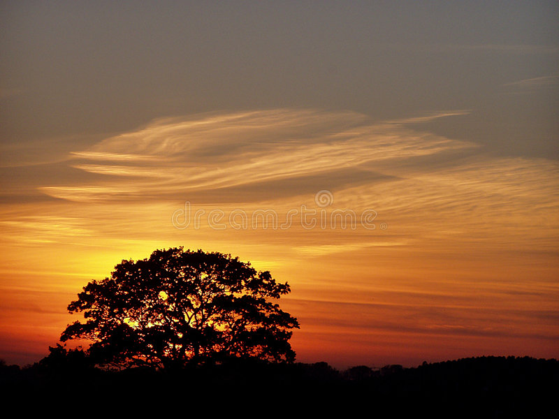 One tree during the sundown royalty free stock photo