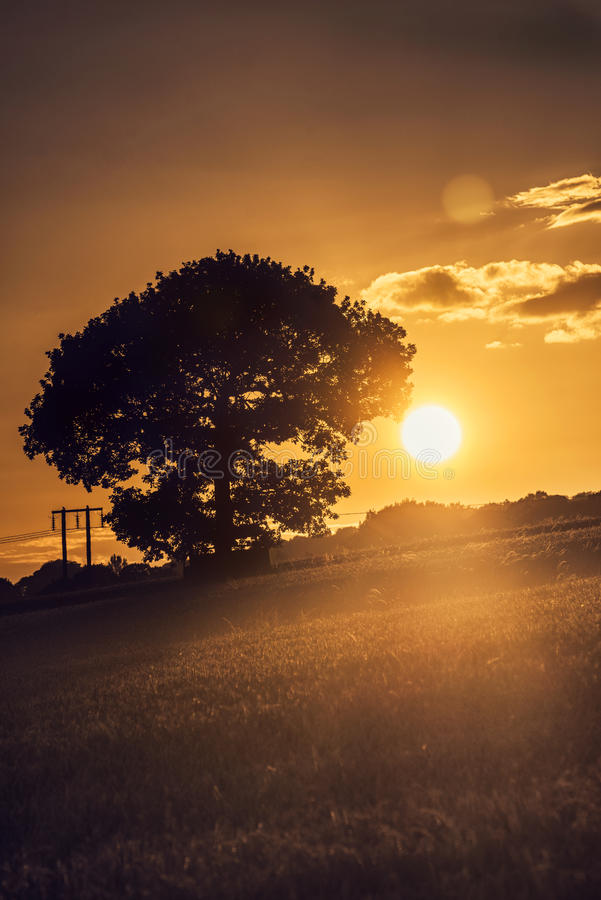 Tree at the sunset stock photography