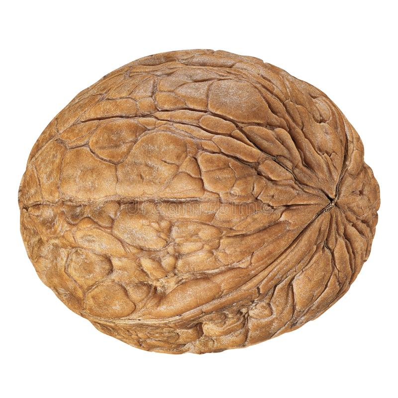 One Walnut isolated closeup in shell as package design element collection on white background. Walnut macro with clipping path royalty free stock photos