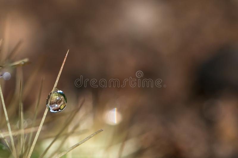 One water droplet. Photos taken in the morning with dew droplet on cactus thorn stock photos