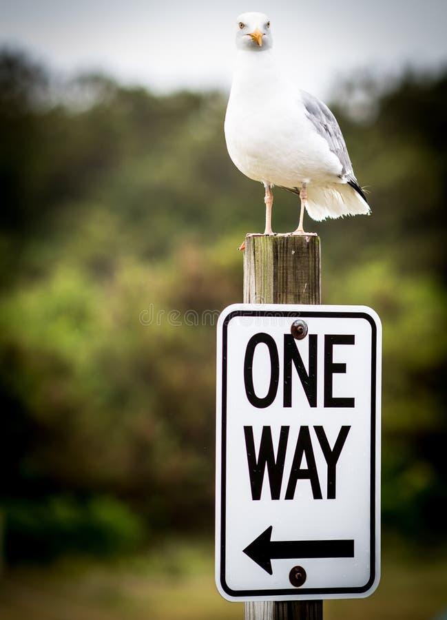One Way Sea Gull Deciding stock photography