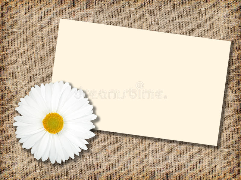 Download One White Flower With Message-card Stock Photo - Image: 14896490