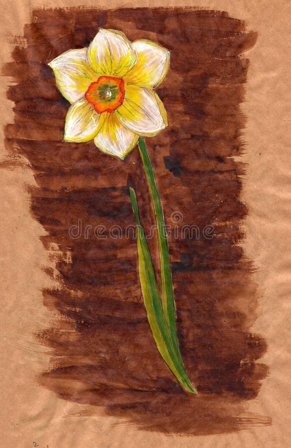 One White Narcissus with Bright Orange-Red Center and Thin Green Leaves on Kraft Paper - Hand-Drawn Watercolor royalty free illustration