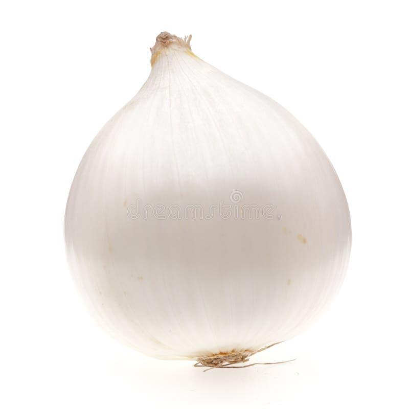 Free One White Onion Bulb Stock Photos - 11324083