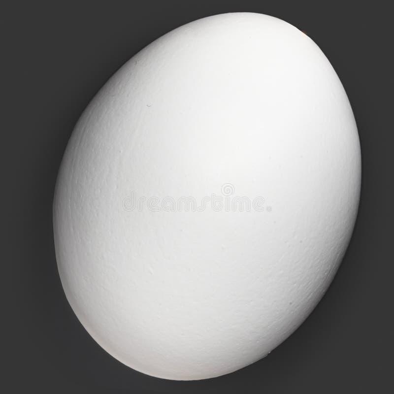 One White Organic Egg Isolated On Black stock images