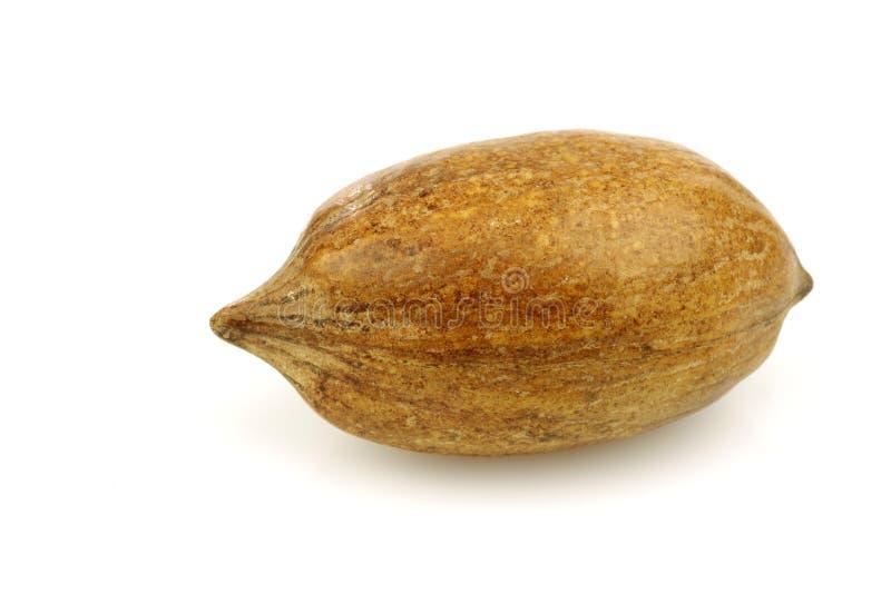 One Whole Pecan Nut Stock Photo