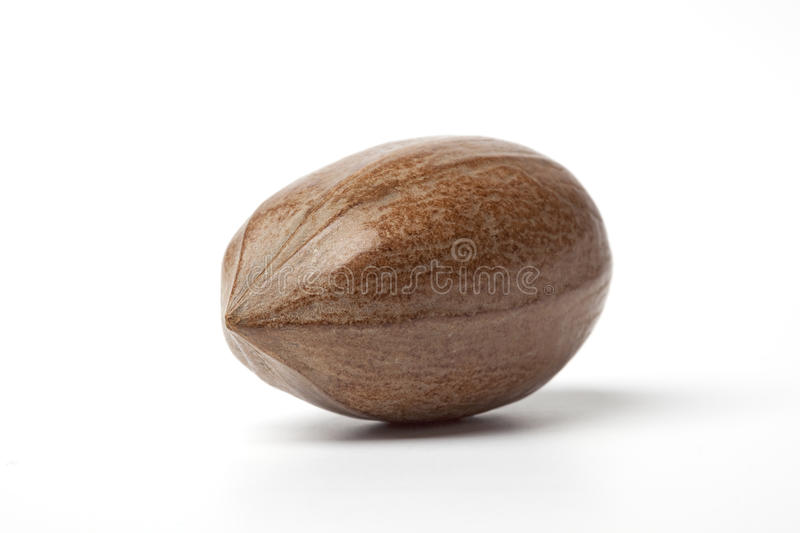 One Whole Single Pecan Nut Royalty Free Stock Photo