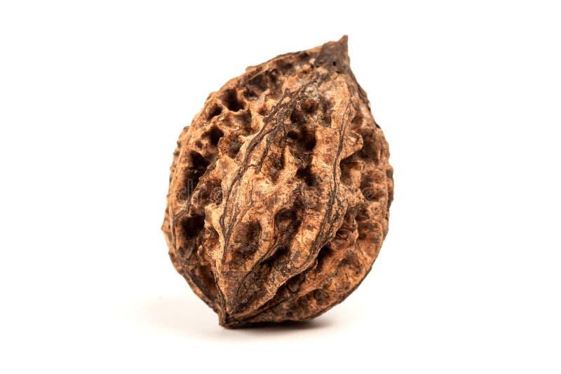One wild walnut. isolated on white background royalty free stock photo