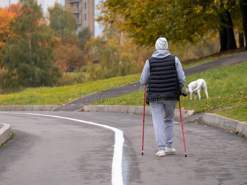 One woman goes Nordic walking with a white dog. Sports walk on a cloudy autumn morning in a city park stock photo