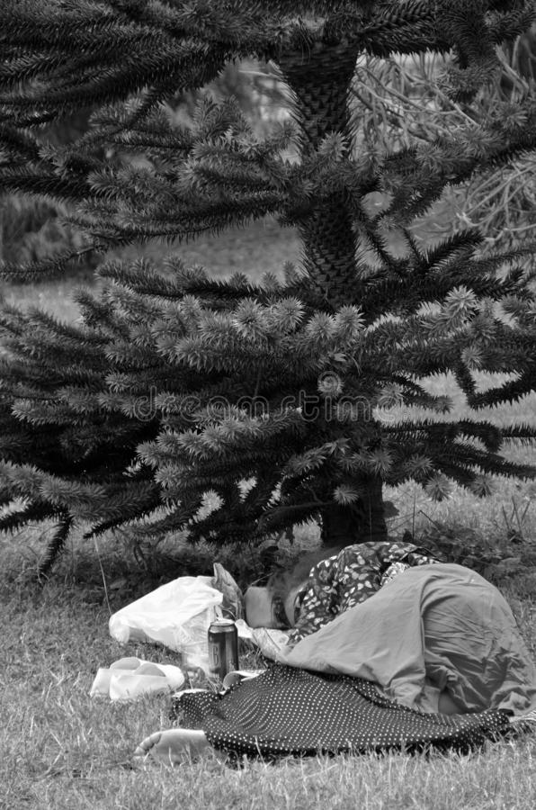 Homeless sleeps under the tree in a park stock photo