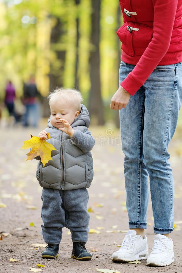 One year old baby boy in autumn park learning to walk with his mother stock photo
