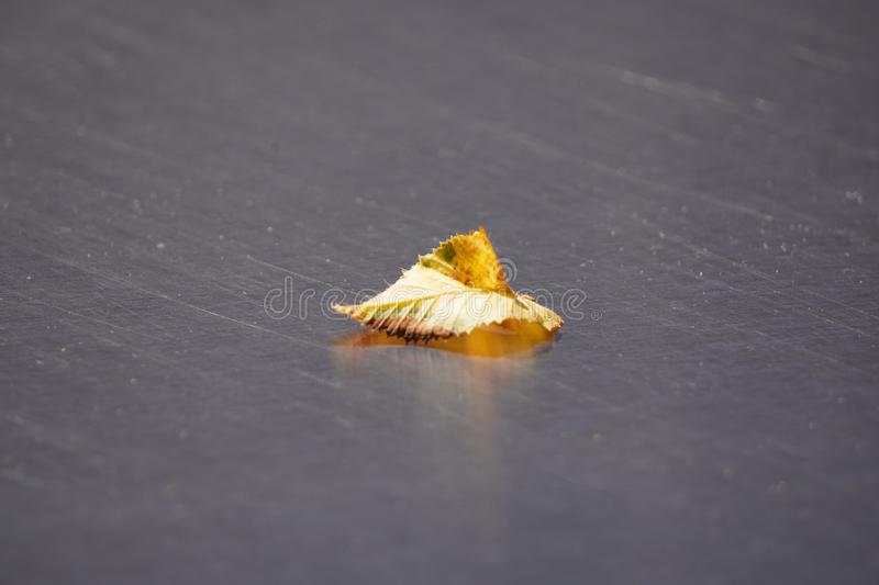 One yellow fallen leaf lies on the smooth surface of the table. the approach of autumn. withering nature before winter royalty free stock image