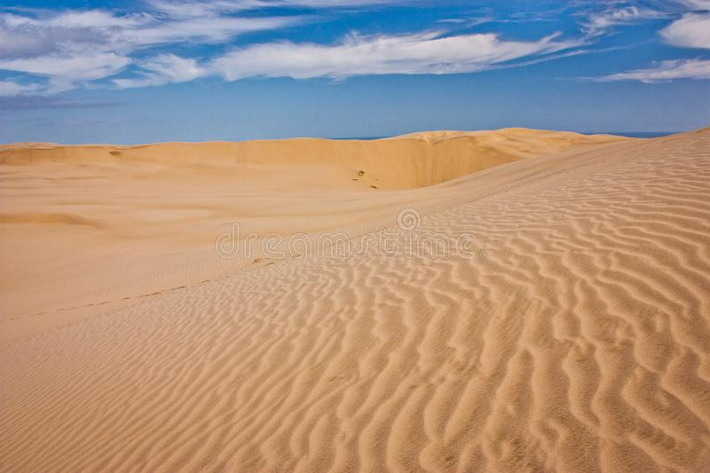 One of the Zelandian deserts in Northland in North Island. Sandy dunes on desert royalty free stock images