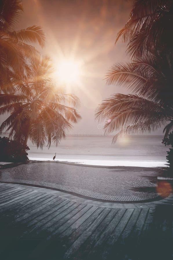 Oneindigheidspool die het overzees in de Maldiven overzien royalty-vrije stock afbeeldingen