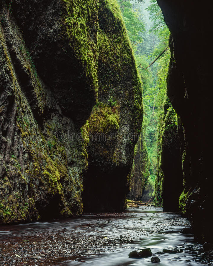 Oneonta Gorge. Columbia River Gorge, Oregon. A view into Oneonta Gorge where you cant even leave footsteps stock images