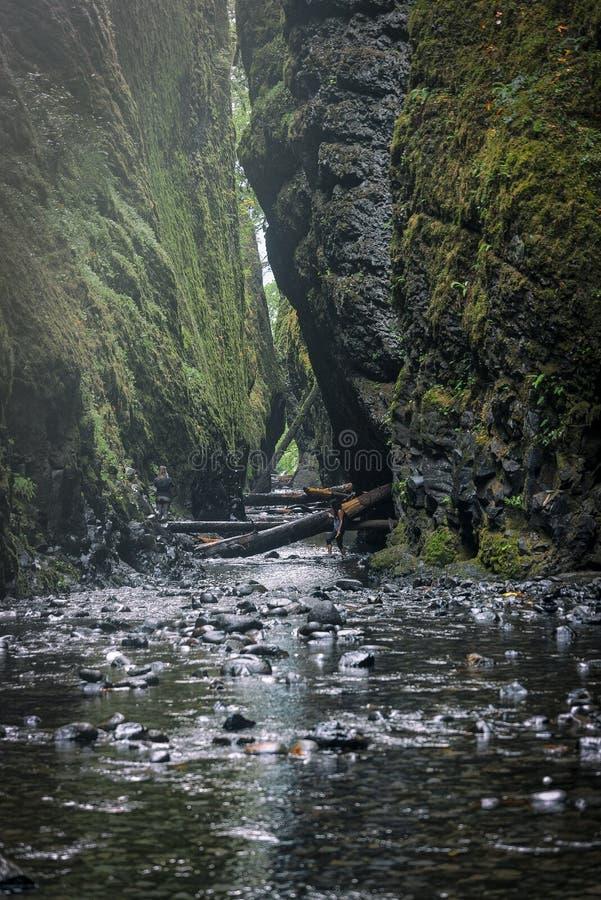 Oneonta inférieur tombe cascade située dans la gorge occidentale, Orégon photo stock