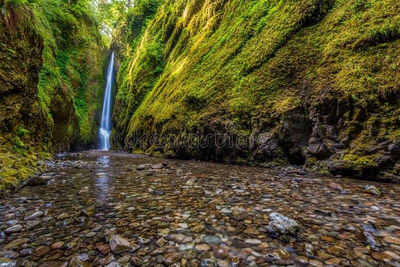 Oneonta inférieur tombe en gorge du fleuve Columbia, Orégon photographie stock