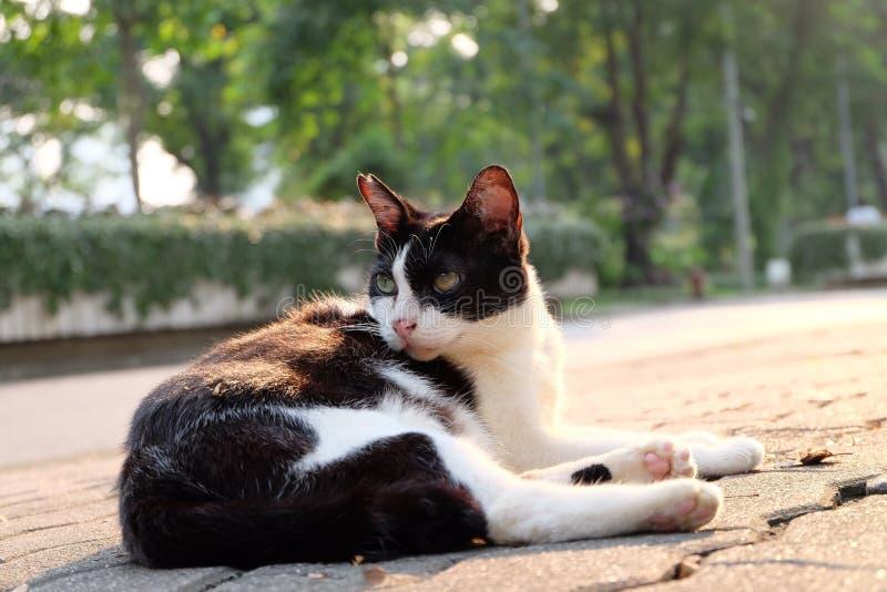 Oneven eyed kat stock afbeelding