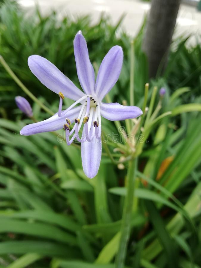Oneven purpere bloem stock foto's