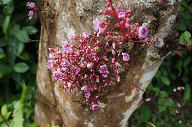 Ongebruikelijke bloemen royalty-vrije stock afbeelding