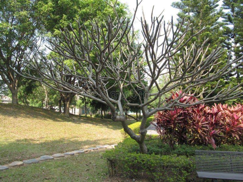 Ongebruikelijke boom in een park van het land royalty-vrije stock afbeeldingen