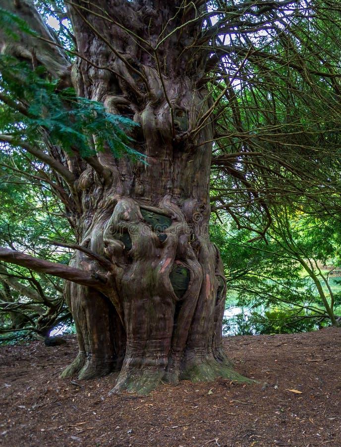 Ongebruikelijke boomvorm stock foto's