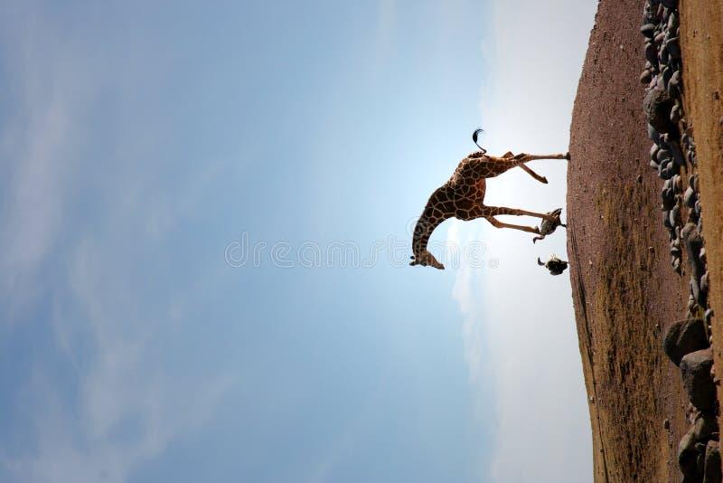 Ongebruikelijke girafvriend of vijanden royalty-vrije stock afbeelding