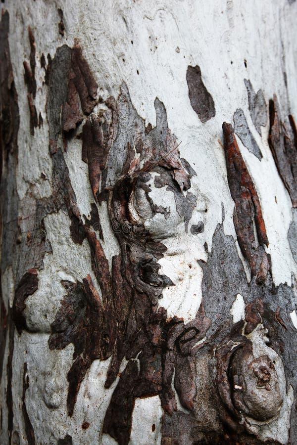 Ongebruikelijke houten boomschors in bruin en wit stock afbeeldingen