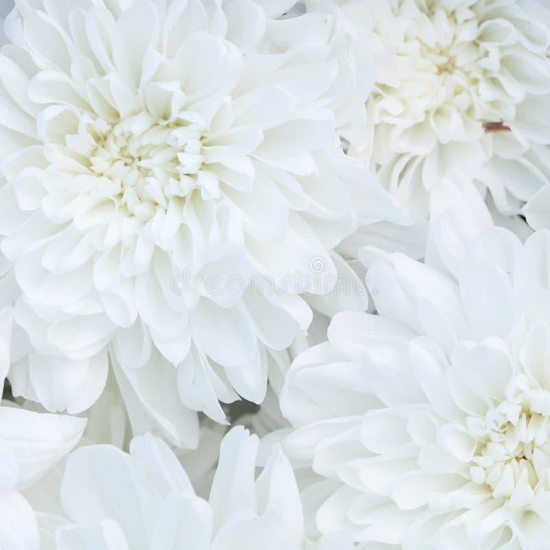 Ongebruikelijke Mooie tedere witte bloemenachtergrond stock foto
