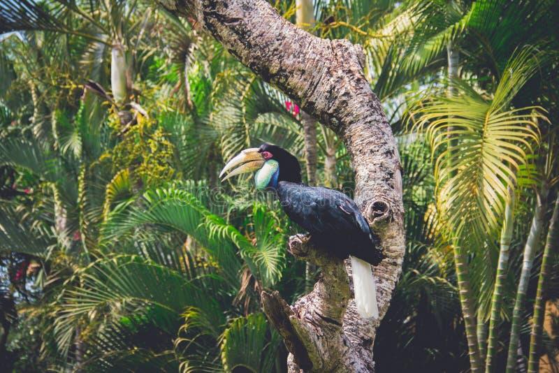 Ongebruikelijke vogel met grote bek stock afbeeldingen