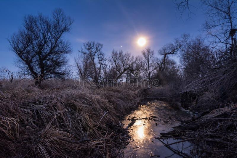 Ongebruikelijke volle maannacht met riet en bomensilhoettes stock afbeelding