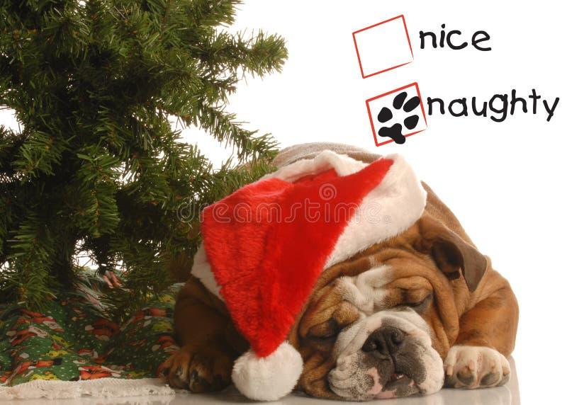 Ongehoorzaam puppy bij Kerstmis royalty-vrije stock afbeeldingen