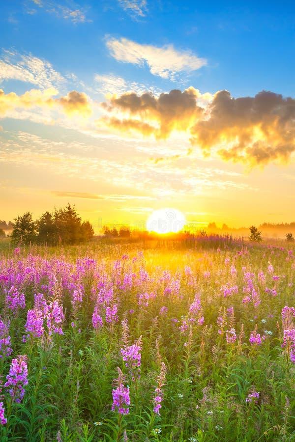 Ongelofelijk landschap met zonsopgang en bloeiende weide stock afbeelding