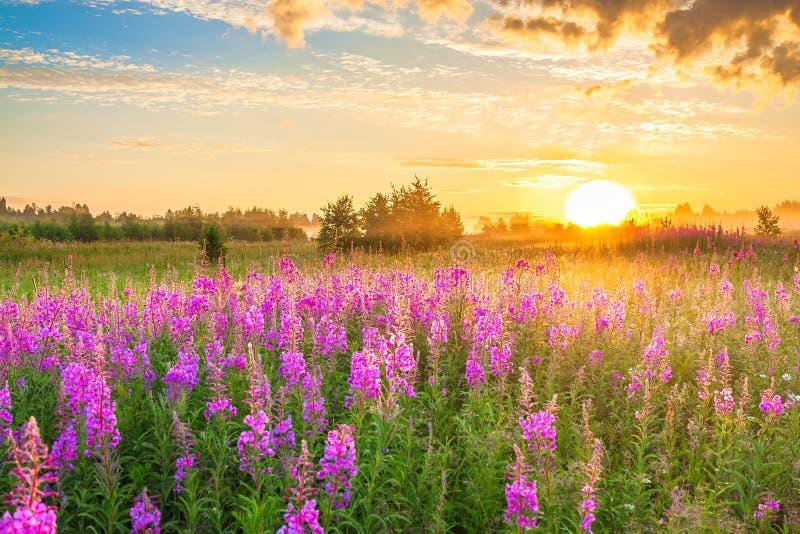 Ongelofelijk landschap met zonsopgang en bloeiende weide stock afbeeldingen