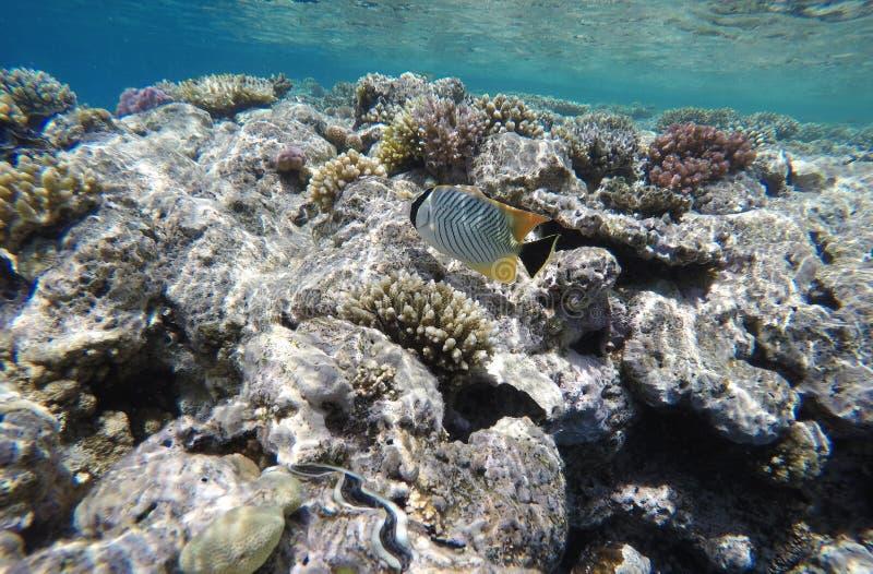Ongelooflijk mooi koraalrif, heel wat vissen stock foto's