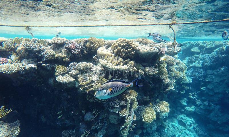 Ongelooflijk mooi koraalrif, heel wat vissen stock afbeelding
