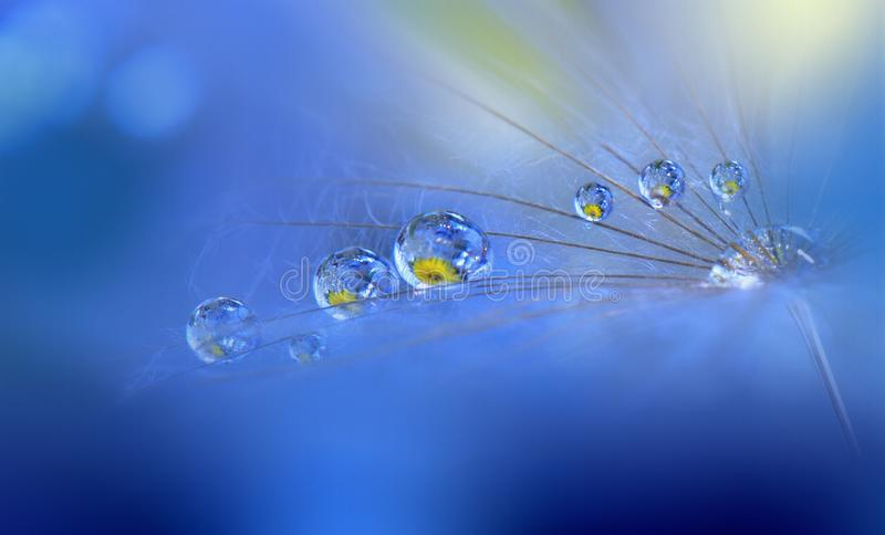 Ongelooflijk mooie aard Kunstfotografie Bloemenfantasieontwerp Abstracte macro, close-up, waterdalingen Achtergrond voor een uitn royalty-vrije stock foto